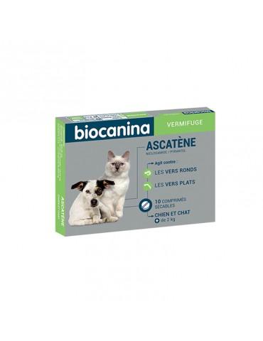 Ascatène Comprimés