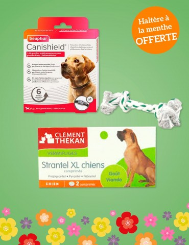 Pack de Printemps Grands Chiens