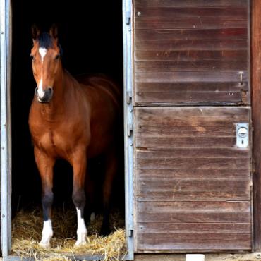 Box cheval