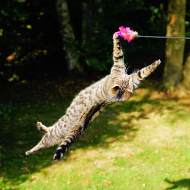 Chat qui joue dans l'herbe avec un plumeau
