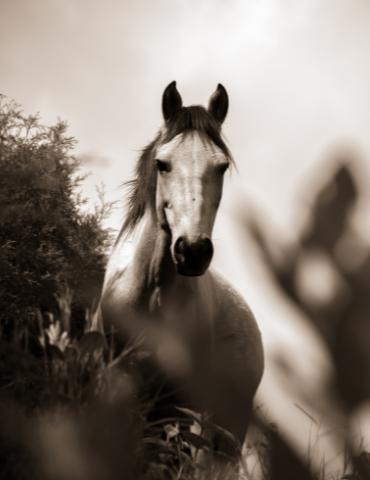 Portait cheval