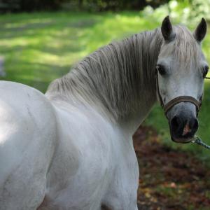 Cheval blanc de dos