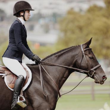 beau cheval avec son cavalier
