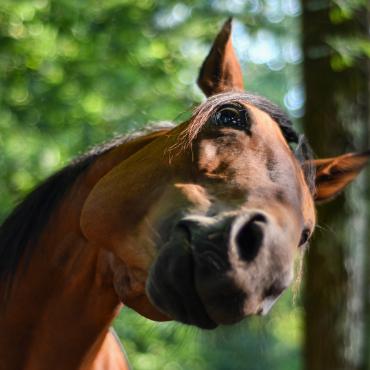 Gros plan cheval qui renifle