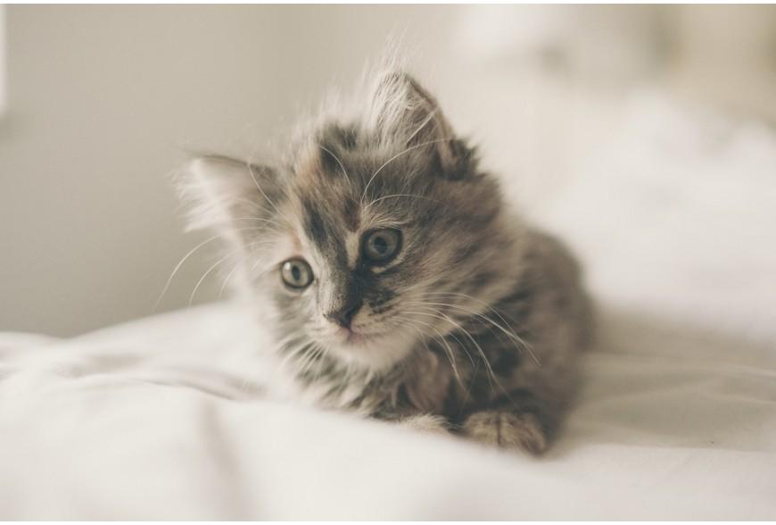 Quelques règles essentielles à connaître quand on adopte un chaton