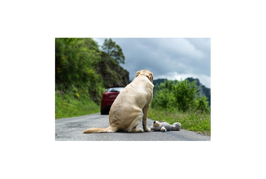 Partir en vacances avec des animaux : des solutions existent !