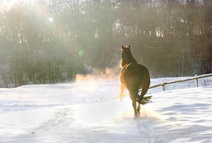 Pourquoi donner des vitamines à son cheval ?