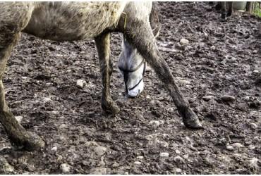 La gale de boue, qu'est ce que c'est ?