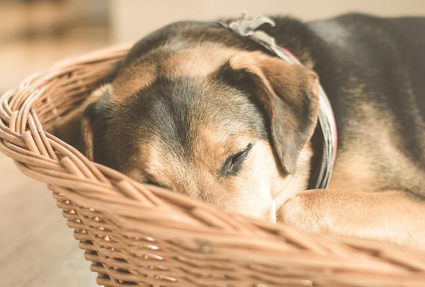 L'arthrose, comment soulager son chien?