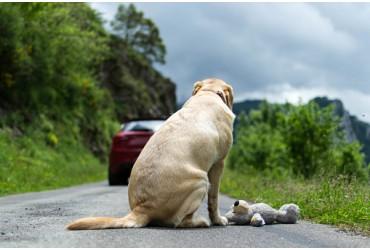 Mobilisons-nous contre la maltraitance animale