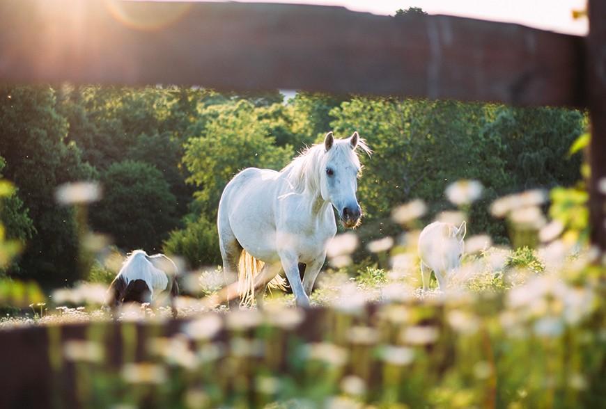 Proferm, Améliorez la santé de votre cheval grâce aux EM!